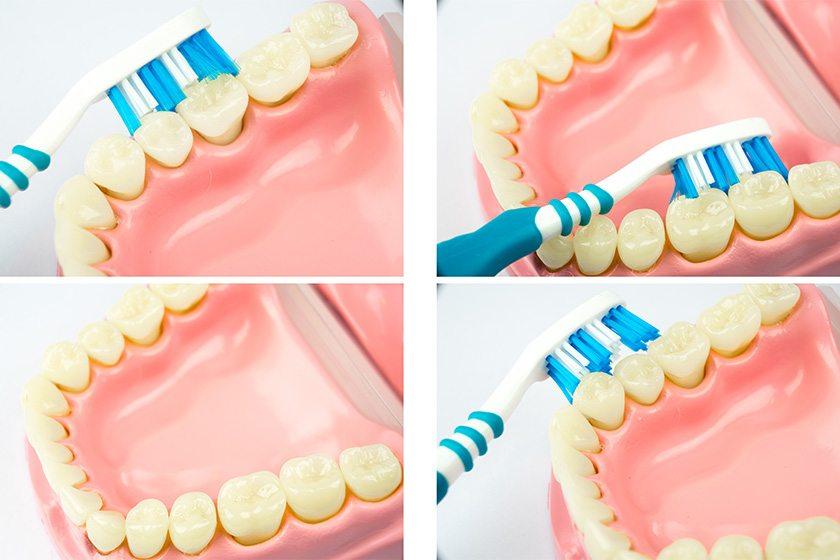 dişler nasıl fırçalanır